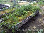 Palette raised beds
