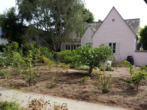 Greywater System - Laundry to Landscape - finished installation - The Greenman Project