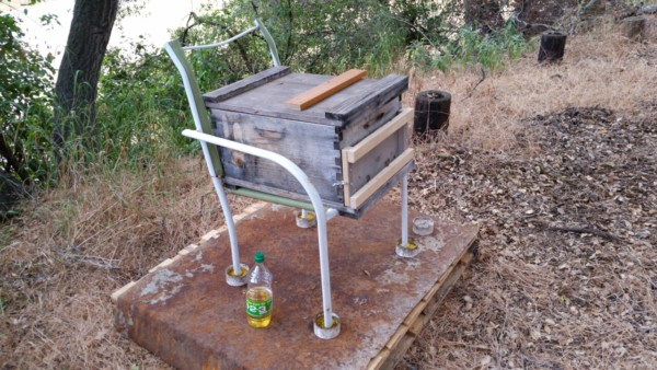 Bee keeping - The Greenman Project